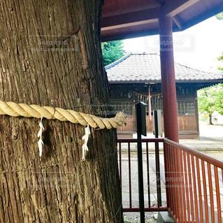 御神木の写真・画像素材[1265727]