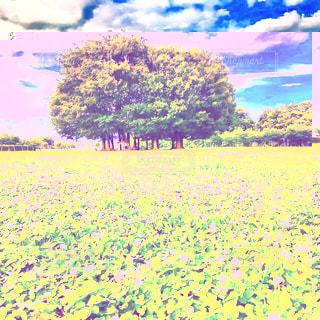 春おかひろ場の写真・画像素材[1290742]