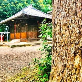 神社の写真・画像素材[1295617]