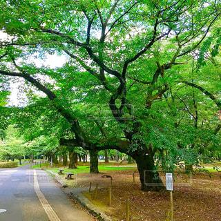 大宮公園の写真・画像素材[1322538]
