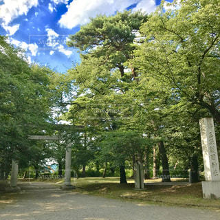 大宮公園の写真・画像素材[1322539]