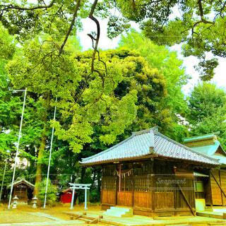 神社の写真・画像素材[1330082]
