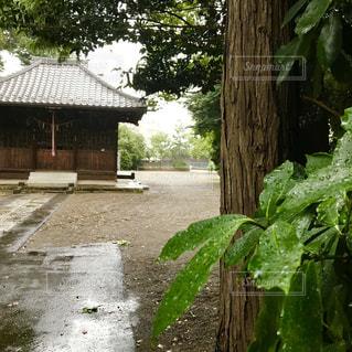 雨のなかの神社の写真・画像素材[1371677]