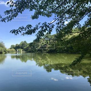 大宮公園の写真・画像素材[1414444]