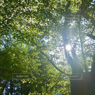 木漏れ日の写真・画像素材[1414445]