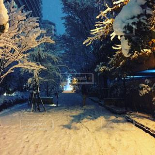 雪の積もった小道の写真・画像素材[1102498]