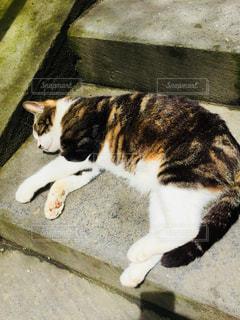 階段でとろける猫の写真・画像素材[1108518]