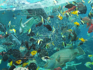 人々 のグループは水中の写真・画像素材[1103033]