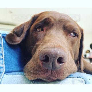 犬の写真・画像素材[162407]