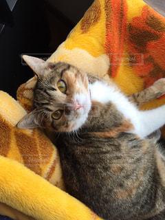 ゲージの上の毛布の上で寝たい猫の写真・画像素材[1102730]