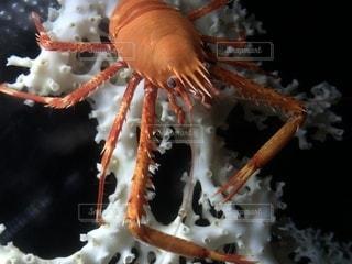 水族館の生き物の写真・画像素材[1102709]