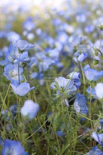 近くの花のアップの写真・画像素材[1140949]