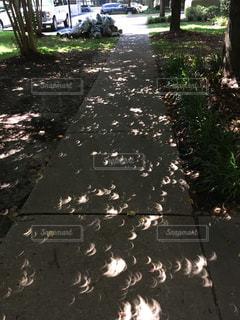 皆既日食の影の写真・画像素材[1103178]