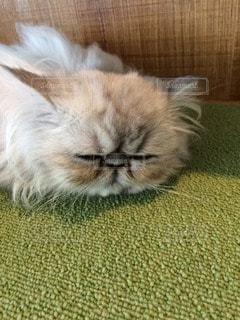 猫 - No.35869