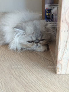 猫 - No.35884