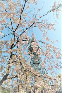 桜と名古屋テレビ塔の写真・画像素材[1104583]