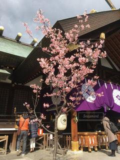 神社に咲く綺麗な梅の木の写真・画像素材[1103669]