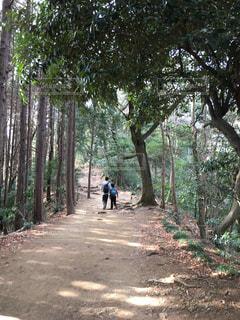 高尾山の登山道の写真・画像素材[1104042]