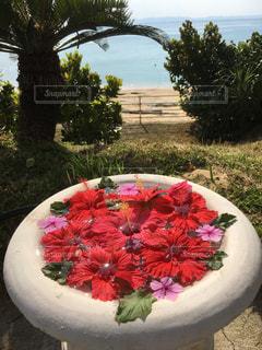 テーブルの上のピンクの花の木の写真・画像素材[1112316]