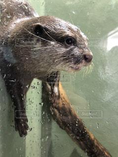 水中を泳ぐ動物の写真・画像素材[1165050]