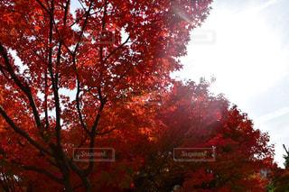 近くの木のアップの写真・画像素材[1155627]