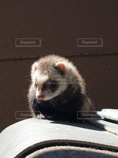茶色と白の動物の写真・画像素材[1103702]
