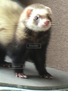 小さな茶色の動物の写真・画像素材[1104055]