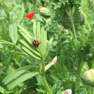 緑の葉と赤い花の写真・画像素材[1159591]