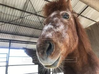馬の写真・画像素材[1104115]