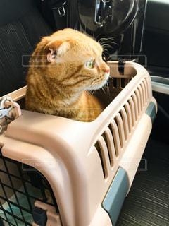 車の上に座っている猫の写真・画像素材[2509488]