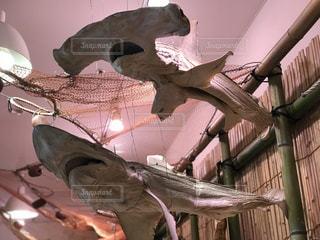 干物 サメの写真・画像素材[1322778]