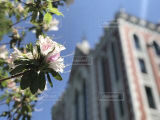 慶應義塾大学 東館 ツツジの写真・画像素材[1329253]