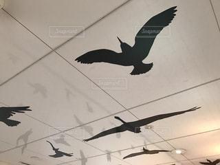 空を飛んでいる鳥の写真・画像素材[1427932]