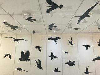 空を飛んでいる鳥の写真・画像素材[1427933]