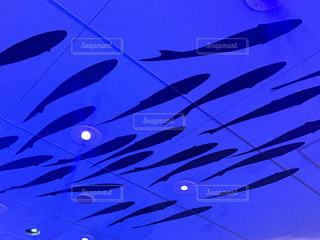 魚の群れの写真・画像素材[1427934]