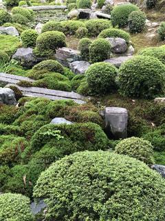 東福寺 開山堂の写真・画像素材[1494240]