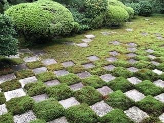 東福寺本坊庭園の写真・画像素材[1494275]