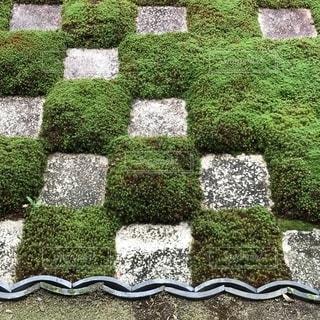 東福寺本坊庭園の写真・画像素材[1494278]