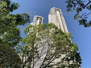 東京都庁の写真・画像素材[2081678]