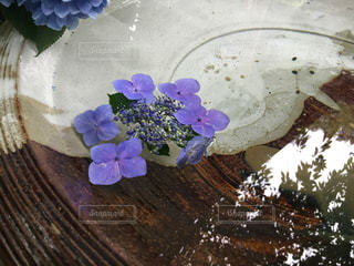 紫陽花の写真・画像素材[2118949]