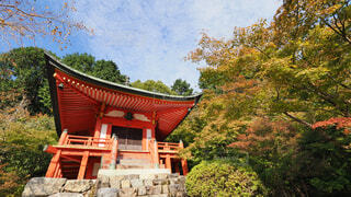 醍醐寺の写真・画像素材[3798402]