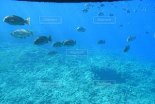 沖縄の海の写真・画像素材[1107442]