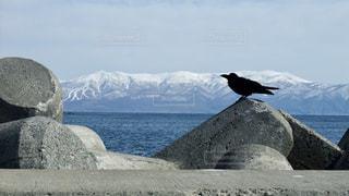 北海道の海とカラスの写真・画像素材[1115116]