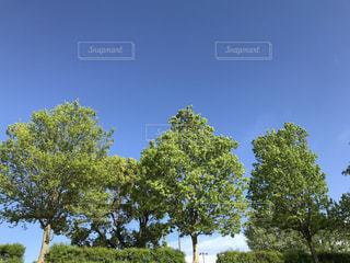 公園の植樹の写真・画像素材[1130242]