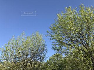 公園の植樹の写真・画像素材[1130243]
