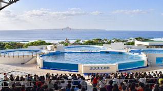 沖縄海洋博公園オキちゃん劇場の写真・画像素材[1134696]