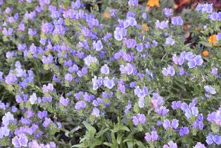 安城市デンパークの花の写真・画像素材[1139921]