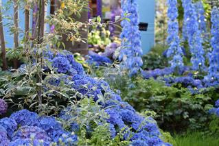愛知県安城市デンパークの花の写真・画像素材[1139924]