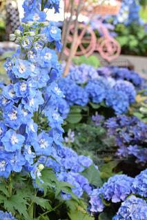 愛知県安城市デンパークの花の写真・画像素材[1139933]