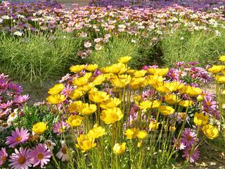 愛知県安城市デンパークの花の写真・画像素材[1144193]